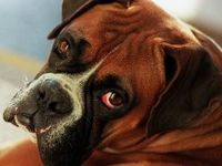 Boxers are the Best...