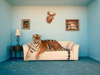 Big Cat Club