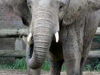 I <3 elephants!