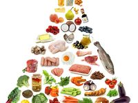 paleo recipes, meal plans, tips and websites.