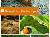Natural Pest Contrpl