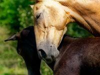 Horse Stuff 3