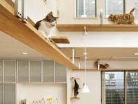 48 Best Cat Walkways Built In Home Images On Pinterest