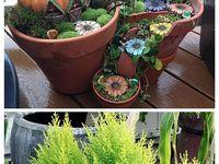 garden, yard