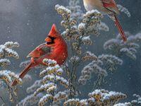 #birds, #butterflies, #moths, #hummingbirds,