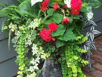Gardening-Shade Plants+Gardens