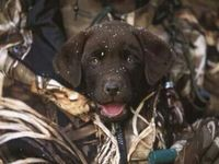 1000 images about hunting fishing and loving every day for Hunting fishing loving everyday
