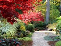 Fall Gardening and Landscaping