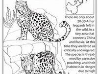 28 best Endangered Animals Activity for Kids images on