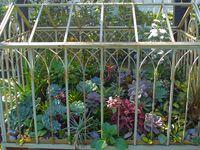 Indoor terrariums. See also 'Hot houseplants' and 'Indoor gardening'
