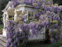 purple-osity