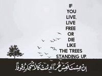 شرح معلقة امرؤ القيس كاملة عالم الأدب Quotations Arabic Poetry Quotes