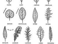 31 best Botany for John images on Pinterest in 2018