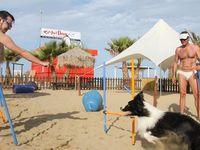 Rimini Dog No Problem Cani E Stabilimento Balneare