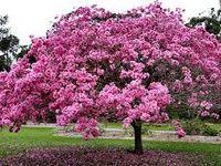 27+ Como se llama el arbol con flores rosas ideas