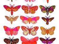 Animals - Butterflies & Moths