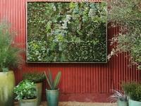 Succulents & Cactus & Sedum