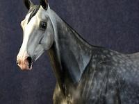 Model Horse Art