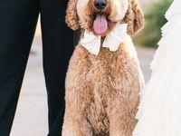 Casamento | pets e outros animais