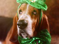 I Am A Connemara Man 1000+ images about Irish /St. Patricks day on Pinterest | Irish ...