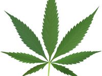 All about Medical Marijuana treatments to Growing it to cooking with it. Used to treat Pain, Cancer and Seizure.