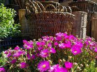 Blog jardinería-Cuidados de  las Plantas y jardín / Secretos y cuidados del jardín, plantas y flores, recetas orgánicas y ecológicas para su cuidado general.