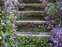 Maison ...Escaliers