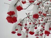 Tis.....All seasons.. :)