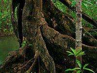 Mora fa nemzetség