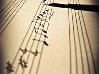 Musical Notes ♫