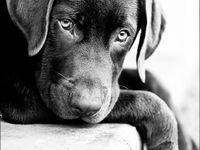 essay my pet animal