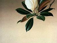 Botanical & Nature - Prints