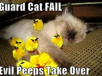 Best Cat Fails