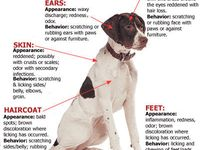 Pet care, animal care, dog care , rabbit care, hamster care, first aids