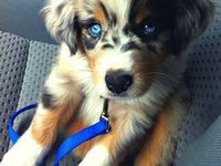 Cute Animals / Cute Animals!