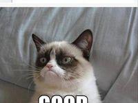 Grumpy Cat... I <3 U