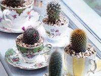 Cactus & Succulent...... / plants