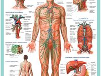 detox sistem limfatic)
