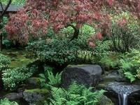 Garden - Japanese Garden