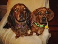 We are two dachshunds.  We like to run. Doxies are cool, don't u think? We have a #dogblog at http://oscarnmayer.com