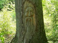 Trees, Tree Houses, and Spirits