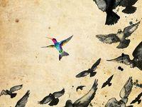 Birds I LOVE BIRDS!