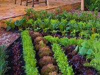 Garden Outdoor Spaces.