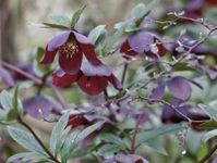 15 best Shade plants for zone 8b, low water needs images ...