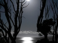 The solace of beautiful moonlight over Nature's mantle!