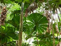 Plants/ trees