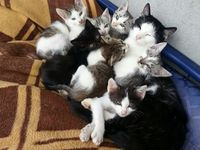 Mom cats and their kittens