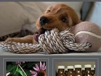 Pets and cute animals