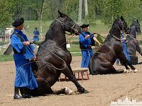 Hungary and Horses