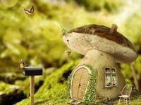 All things mushroom!!!